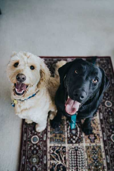 Should I Rent To Pet Owners Property Loop