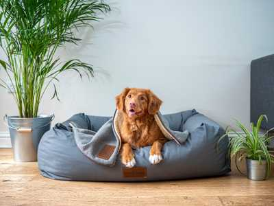 New Laws For Tenants With Pets PropertyLoop