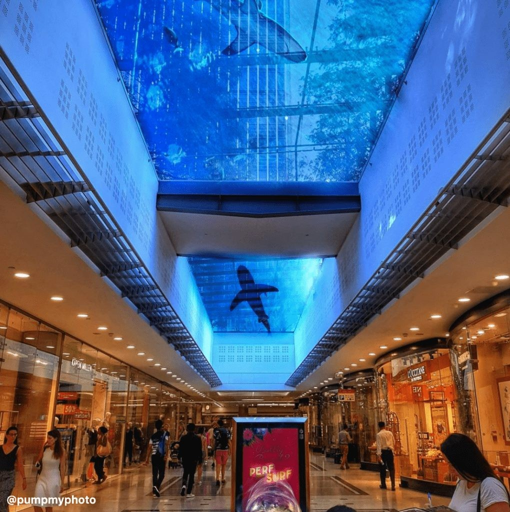 Sharks swimming over the heads of shoppers in jubilee Park