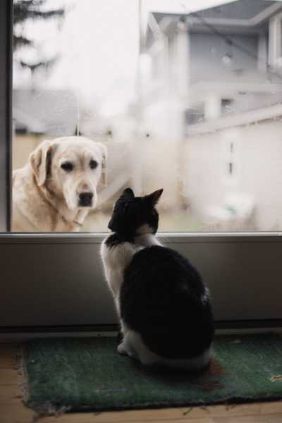 Can A Landlord Say No To Pets? PropertyLoop