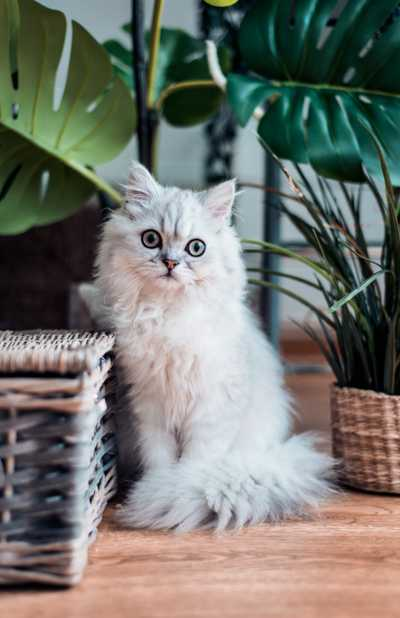 Can A Landlord Say No To Tenants With Pets PropertyLoop