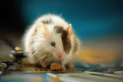 What to do About Vermin in Your Rental Property Property Loop